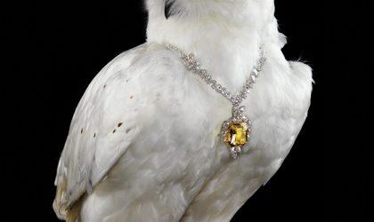 Flights of fancy jewels