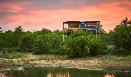 Motswari Private Game Reserve puts weight behind rhino conservation
