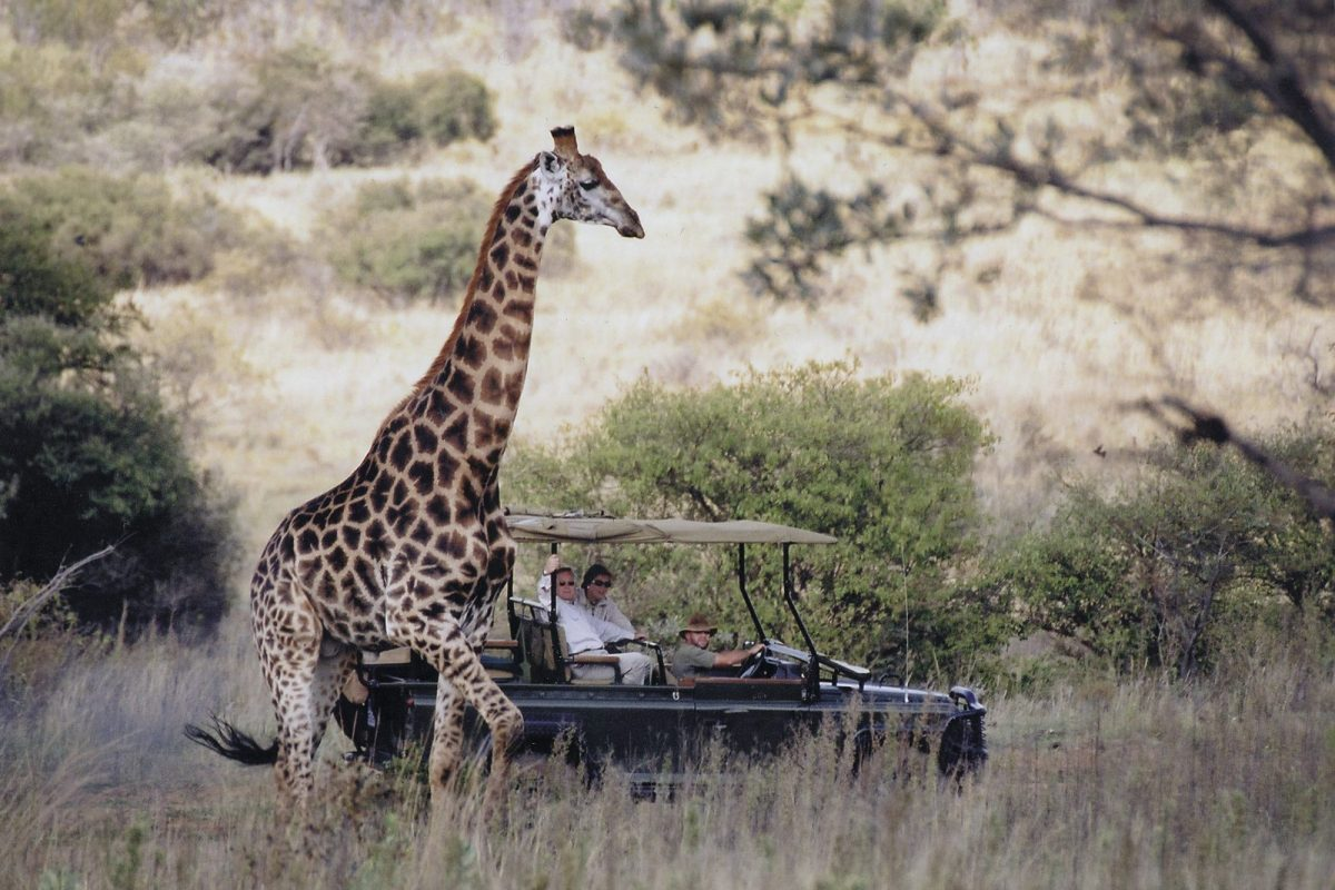 Find peace in the exclusive Makweti Safari Lodge 1