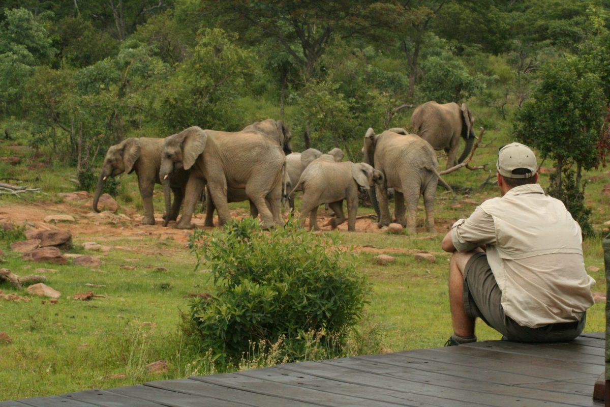Find peace in the exclusive Makweti Safari Lodge 2